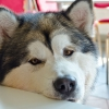 Perros en restaurantes: ¿una buena estrategia empresarial?
