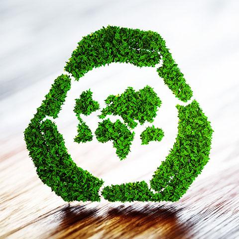 comida y ecología